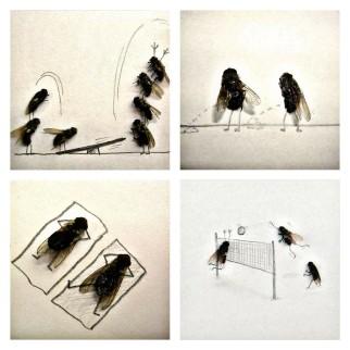 Flychelangelo - Magnus Muhr 2